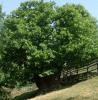 allevamento vacche, prodotti biologici, coltivazione ortaggi