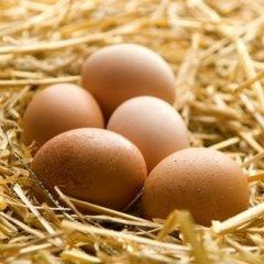 allergeni delle uova