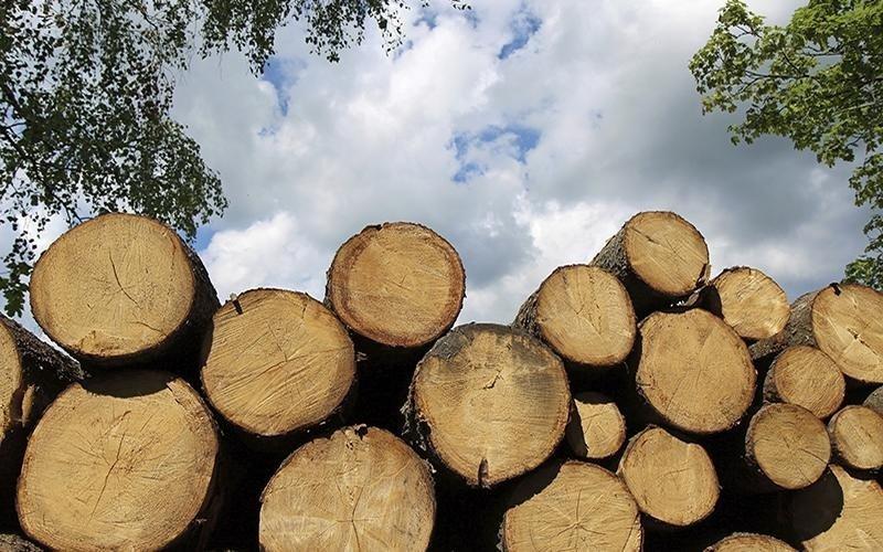 Ecomondo servizi - vendita legna