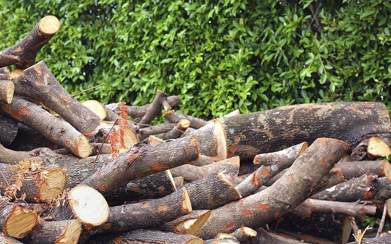 Ecomondo servizi - legna da ardere