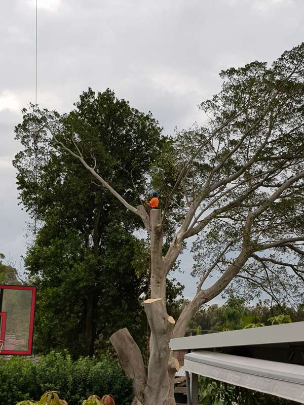 tree being cut down