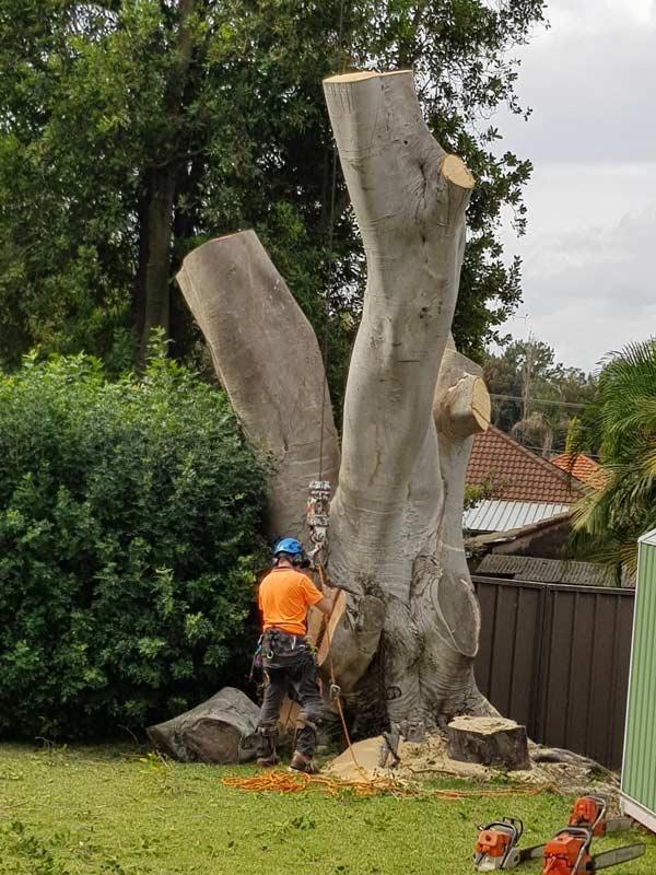 man in orange shirt trimming tree