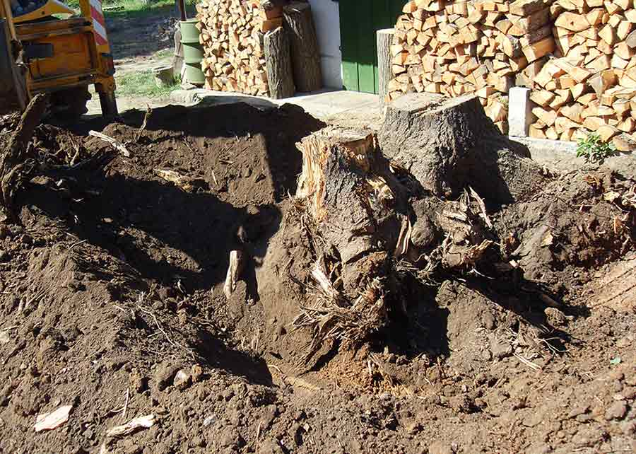 digging out a tree stump