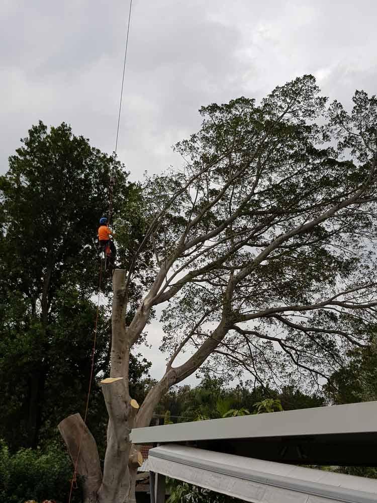 man in orange shirt cutting tree