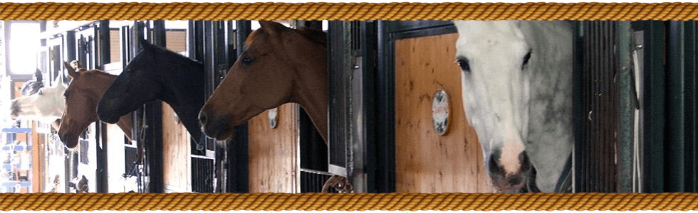pensione per cavalli