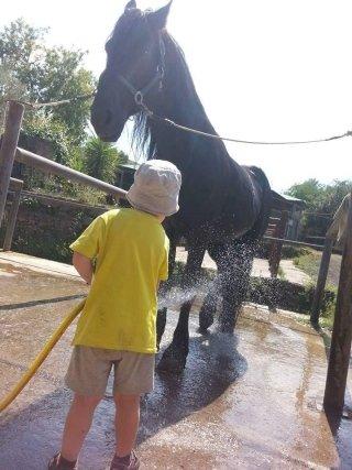bambini e i cavalli