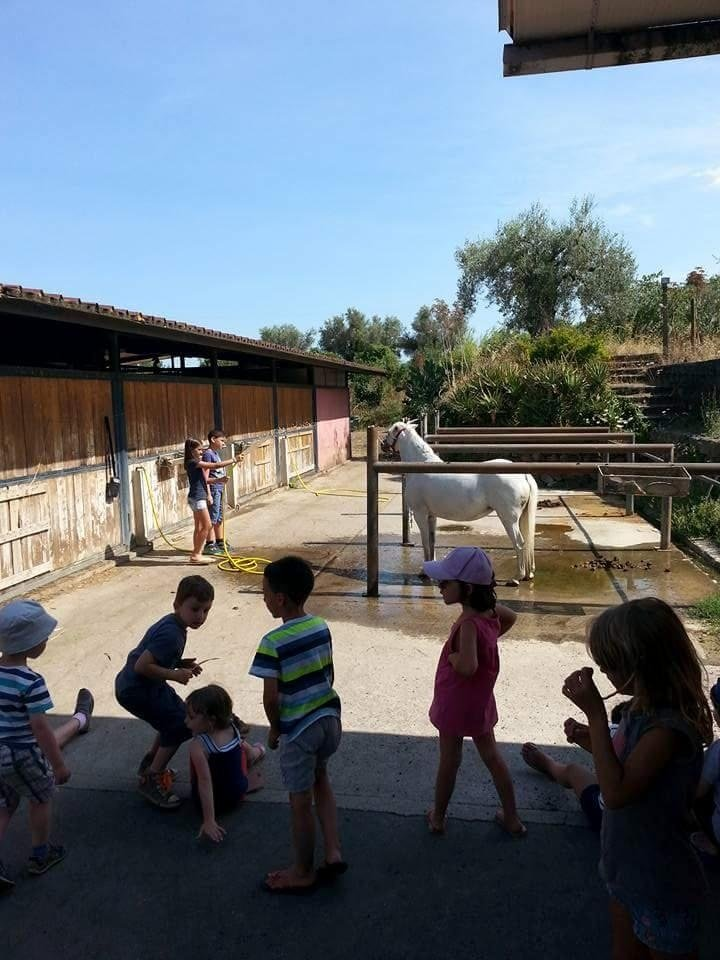 escursioni per bambini con cavalli
