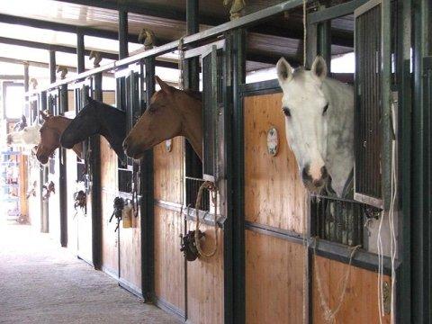 Box pensione per i cavalli