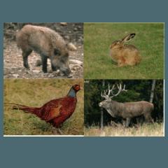 carni selvaggina