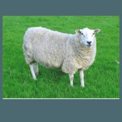 prodotti ovicoli