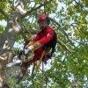 operaio durante una fase di lavorazione su un albero
