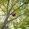 persona su un albero