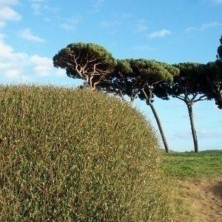 alberi con alto fusto