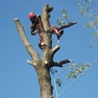 addetto durante una Potatura e abbattimento di un albero