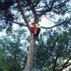 addetto sale il tronco di un  albero con una fune