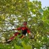 addetto in mezzo alle foglie di un albero