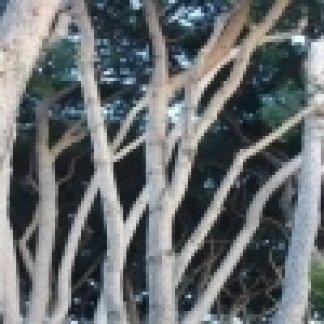 tronchi di alberi