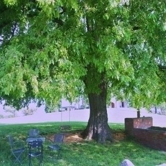 albero in giardino