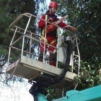 addetto su una gru durante una fase di potatura albero