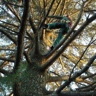 addetto lavora su un albero