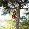 addetto che si arrampica  a un albero