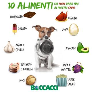 I 10 alimenti da non dare ai cani!