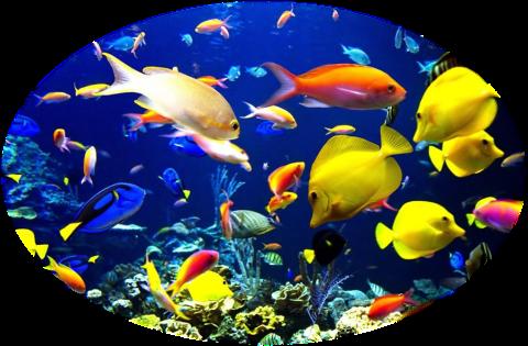 pesci-rettili