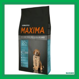 maxima maxi junior