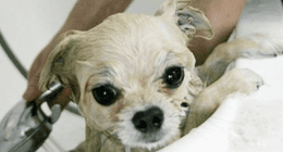 Bagno cucciolo
