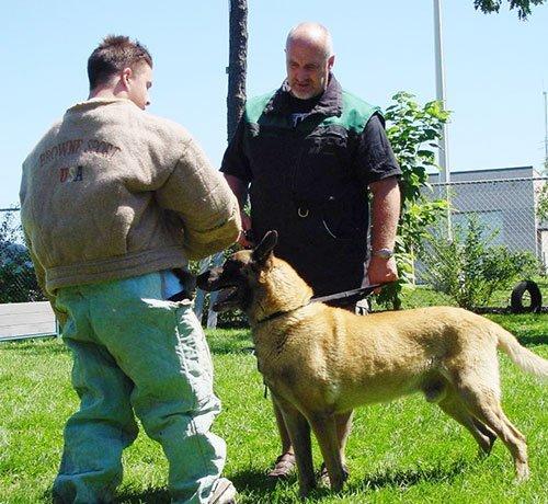 Dog Kennel Ronkonkoma, NY