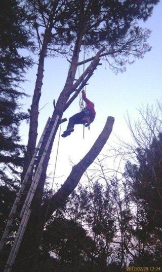 Esperto tree climbing