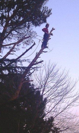 Abbattimento albero tree climbing