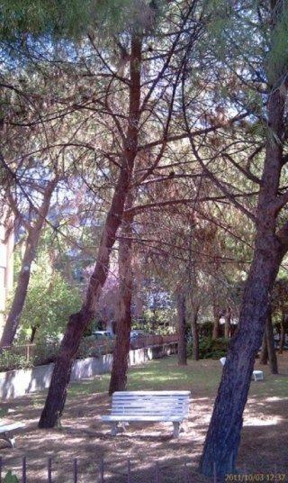 Albero pericolante