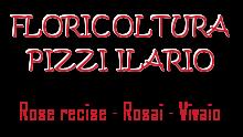 floricoltura pizzi ilario