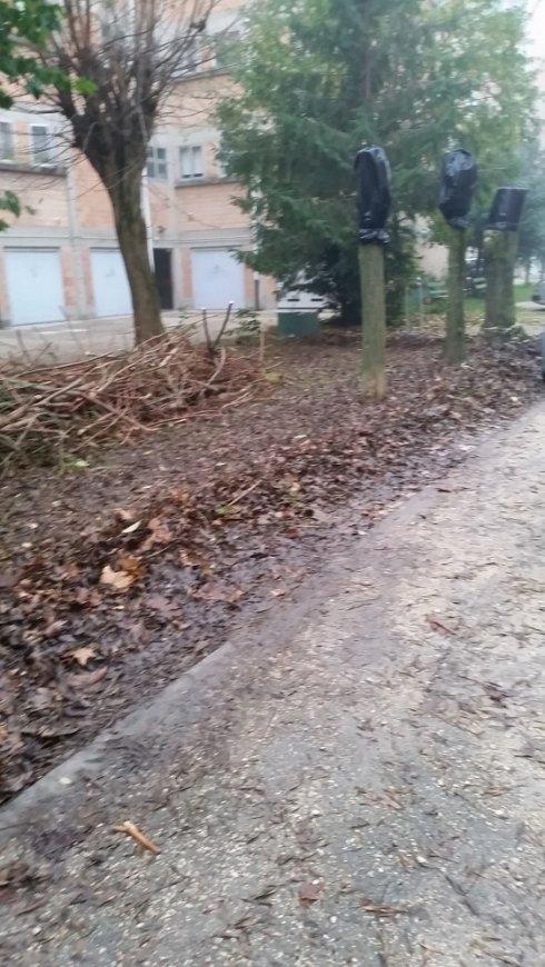 raccolta foglie