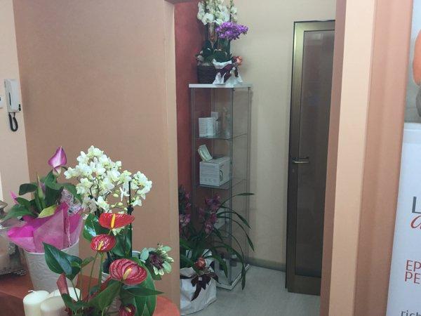 angolo con piante all`interno del centro benessere