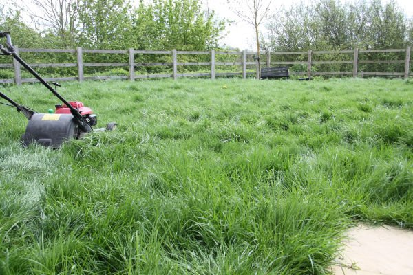 Lawn Awaiting First Cut