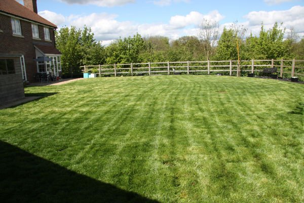 Lawn After First Cut