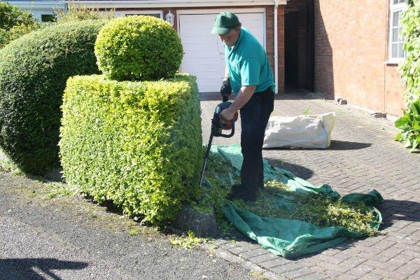 Topiary Work