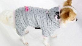 abbigliamento cani, maglioncini, tessuti caldi