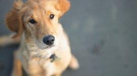 accessori per cani, guinzagli per cani, pettorine per cani