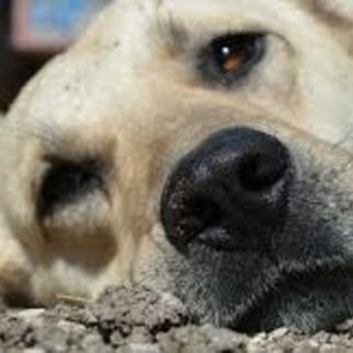 Cosa fare in caso di ingestione di sostanze tossiche a cani e gatti, ingestione di alimenti, prodotti che non fanno bene ai cani