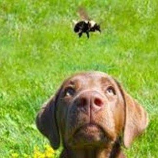 Cosa fare in caso di puntura di insetto a cani e gatti, puntura d