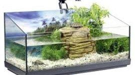 tartarughiere, habitat naturali, tartarughe comune