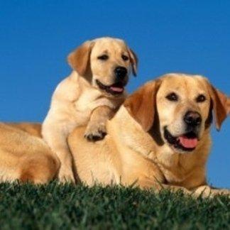 Cosa fare se cani e gatti  hanno  le convulsioni, cosa fare se il cane ha le convulsioni, movimenti insoliti dei cani