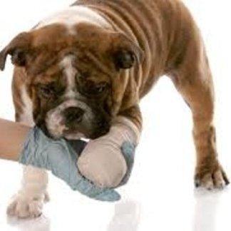 Come comportarsi di fronte a fratture aperte a cani e gatti