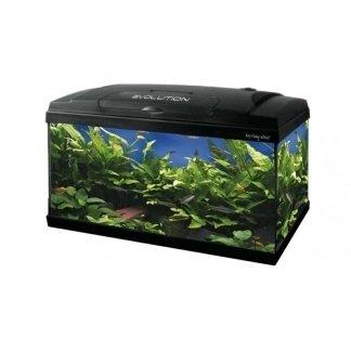 acquari completi accessoriati, acquari completi, pesci comuni