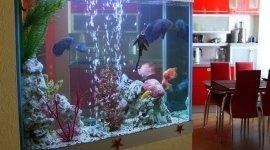 vendita filtri per acquari, pesci tropicali, pesci per acquari