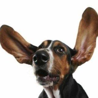 Come eliminare un corpo estraneo dalle orecchie, eliminazione zecche, eliminazione parassiti