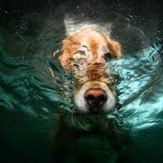 Cosa fare in caso di annegamento di cani, annegamento, acqua